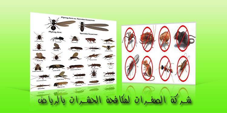 شركة مكافحة حشرات في الرياض P_1858a5iwy2