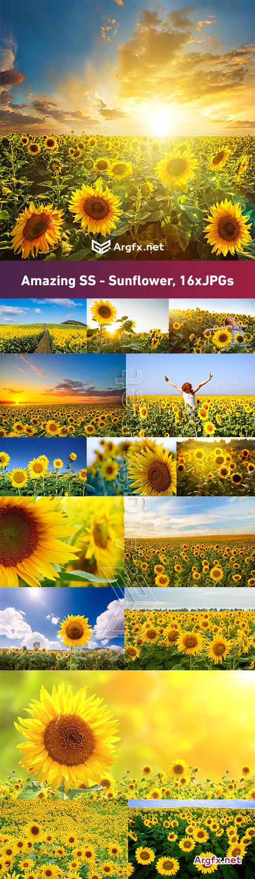 Amazing SS - Sunflower, 16xJPGs